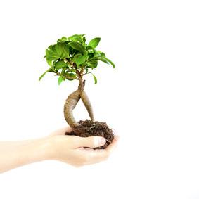 Grünpflanze: Bei aller Technik bedeutet Public Relations heute mehr denn je, den persönlichen Kontakt nicht zu vernachlässigen